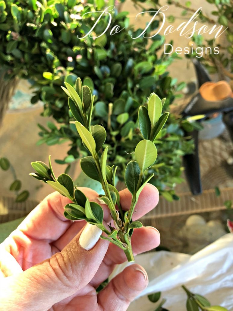 I cut the tops of the boxwoods about 4-5 inches in length. This was a timely task so I just trimmed a few as I went. Looking back, I was glad that I had been selective with each piece, It's totally up to you.