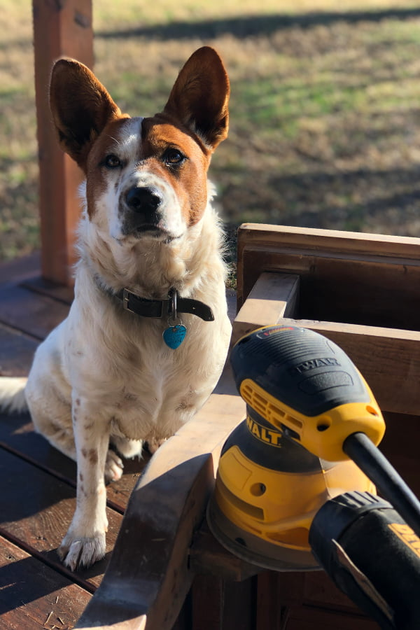 """I carefully removed the damaged veneer and cleaned the wood well before adding the white wax. I'm pretty sure that """"Bud"""" (my rescue) helped by licking. :)"""