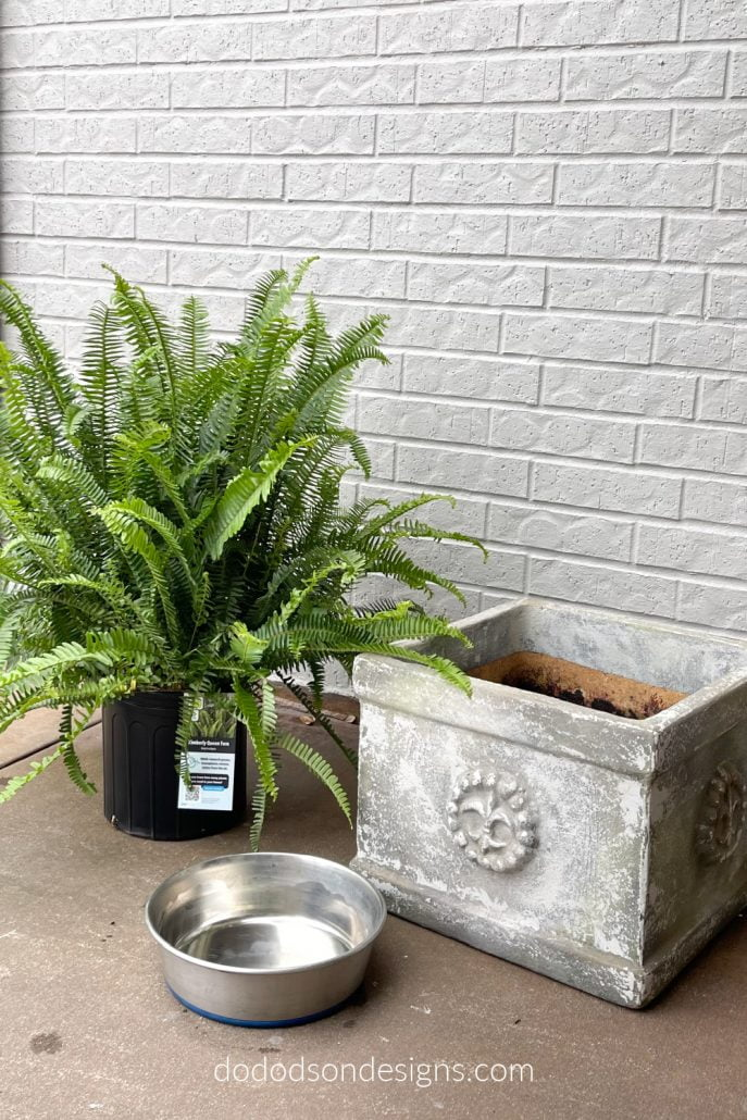 How To Water Your Front Porch Ferns The Easy Way