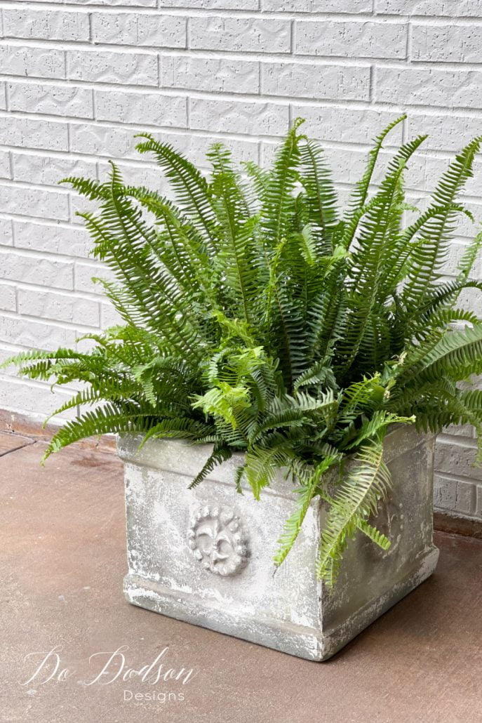 Try using these affordable front porch ferns to spruce up your curb appeal—the perfect choice, and they're super easy to care for.