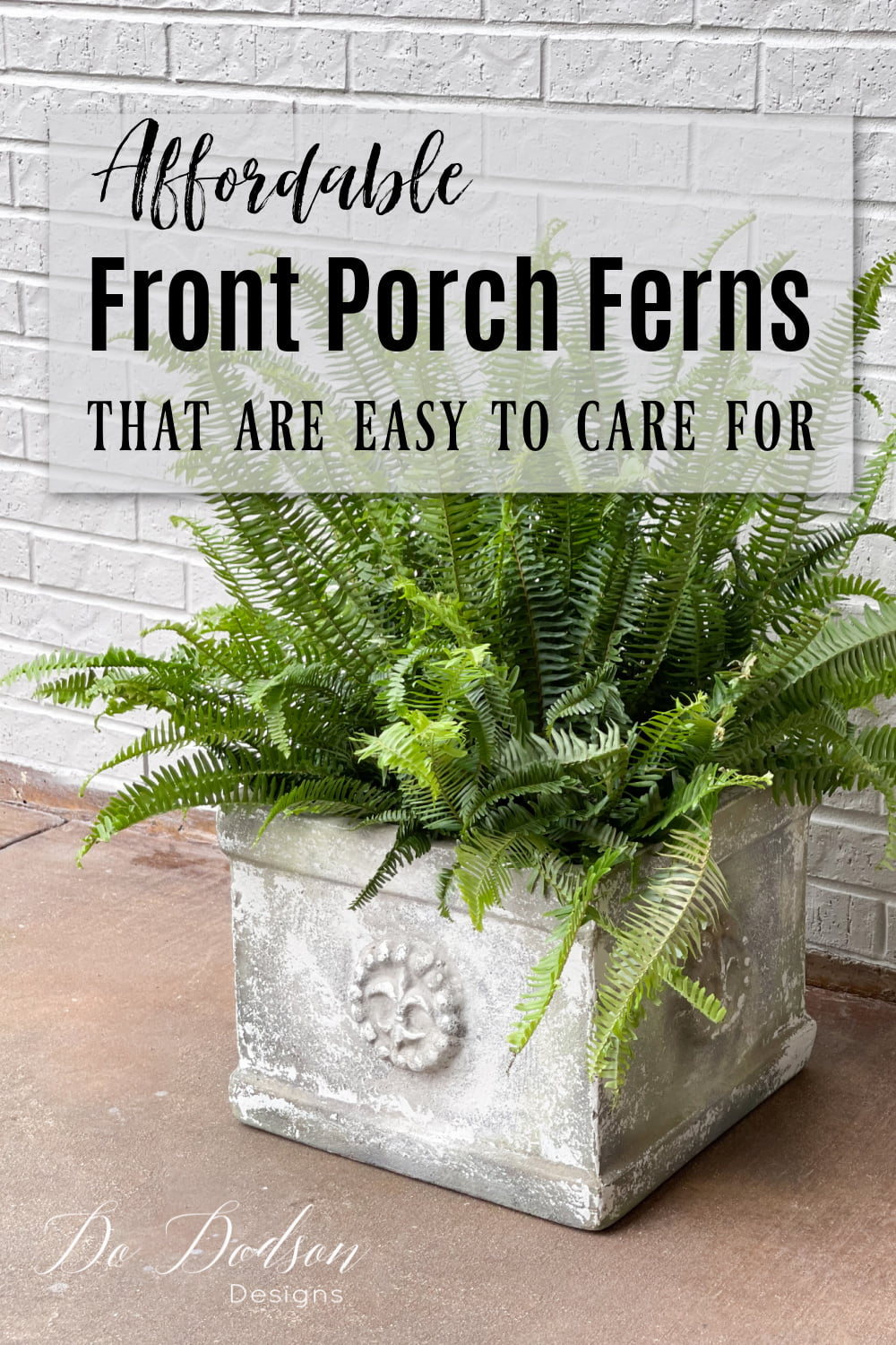 Affordable Front Porch Ferns That Are Easy To Care For