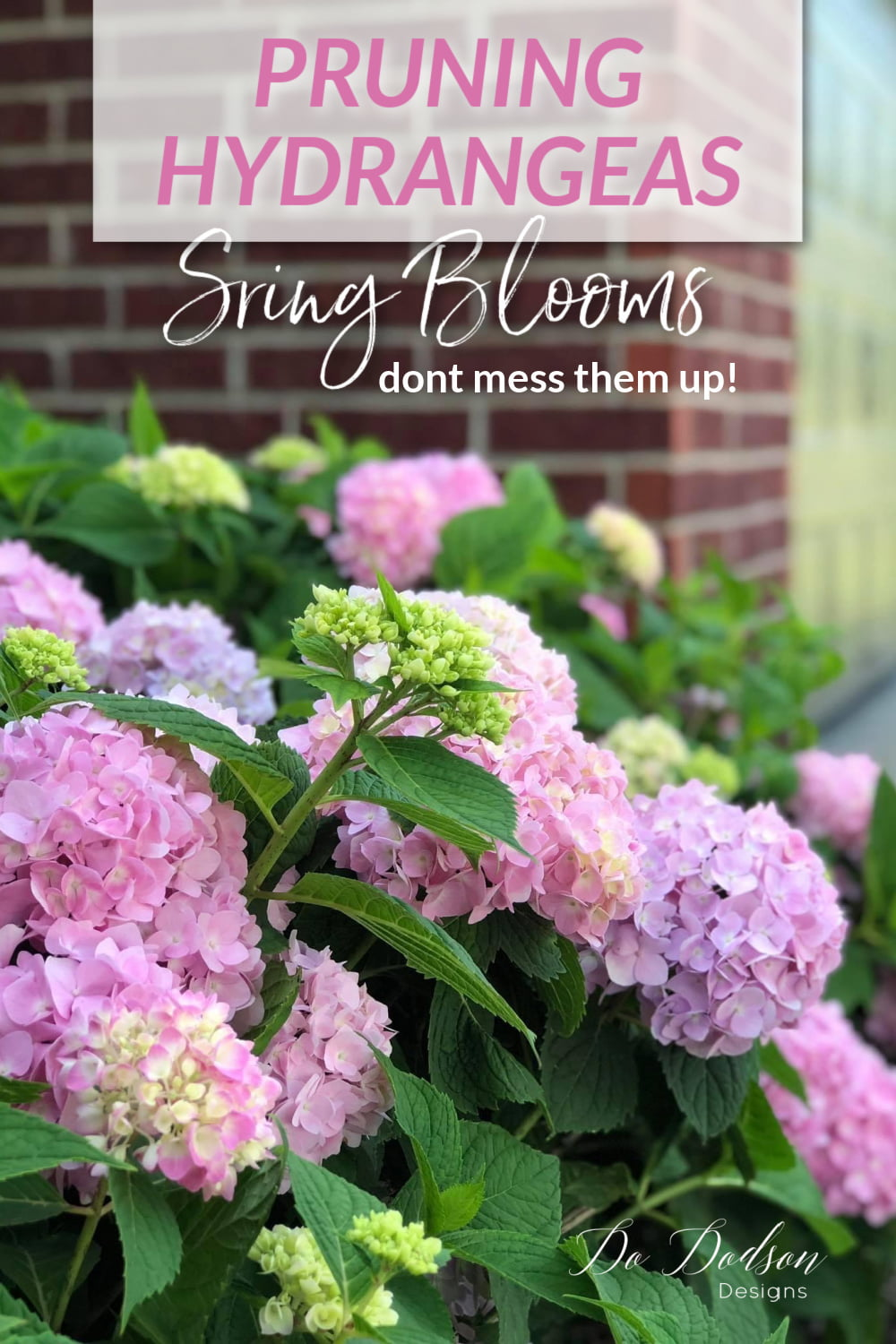 Pruning Hydrangeas Before Spring Blooms - Don\'t Mess Them Up!